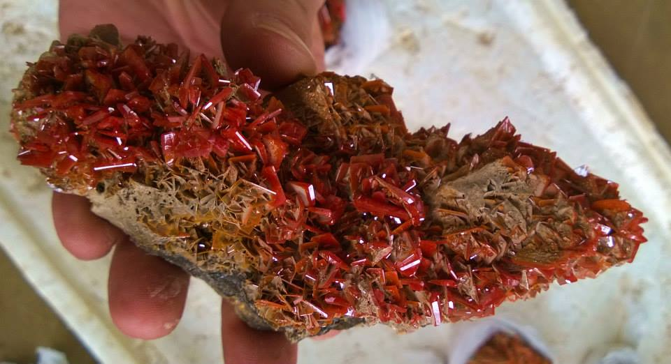 Some of the new red wulfenite from the