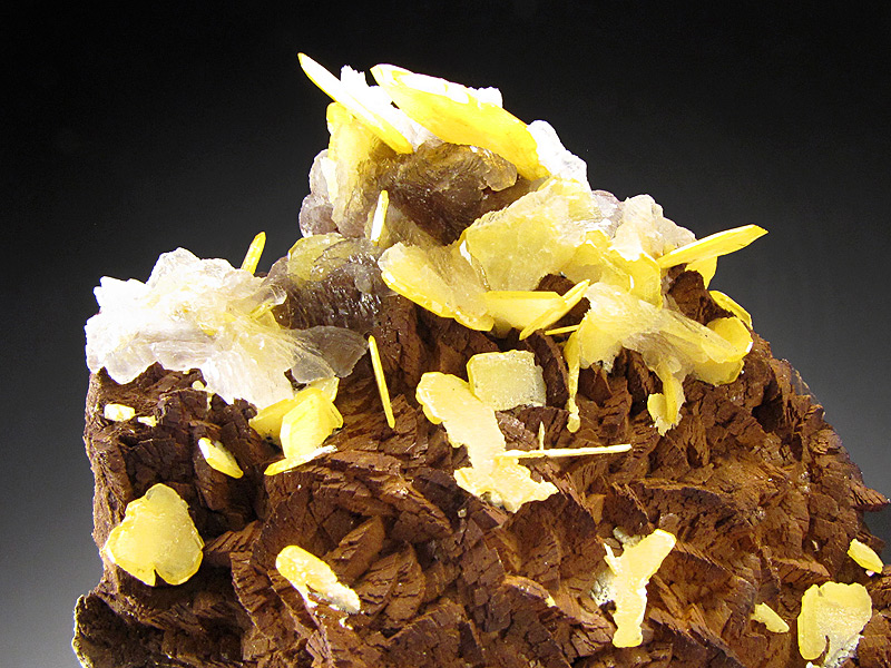 Wulfenite Crystals on Matrix Mibladen Mining District Midelt Khénifra Province Meknès Tafilalet Region Morocco Mineral Specimen For Sale