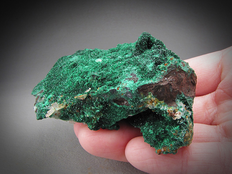 Malachite Concepcion del Oro Zacatecas Mexico Mineral Specimen For Sale